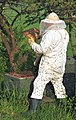 Beekeeper keeping bees.jpg