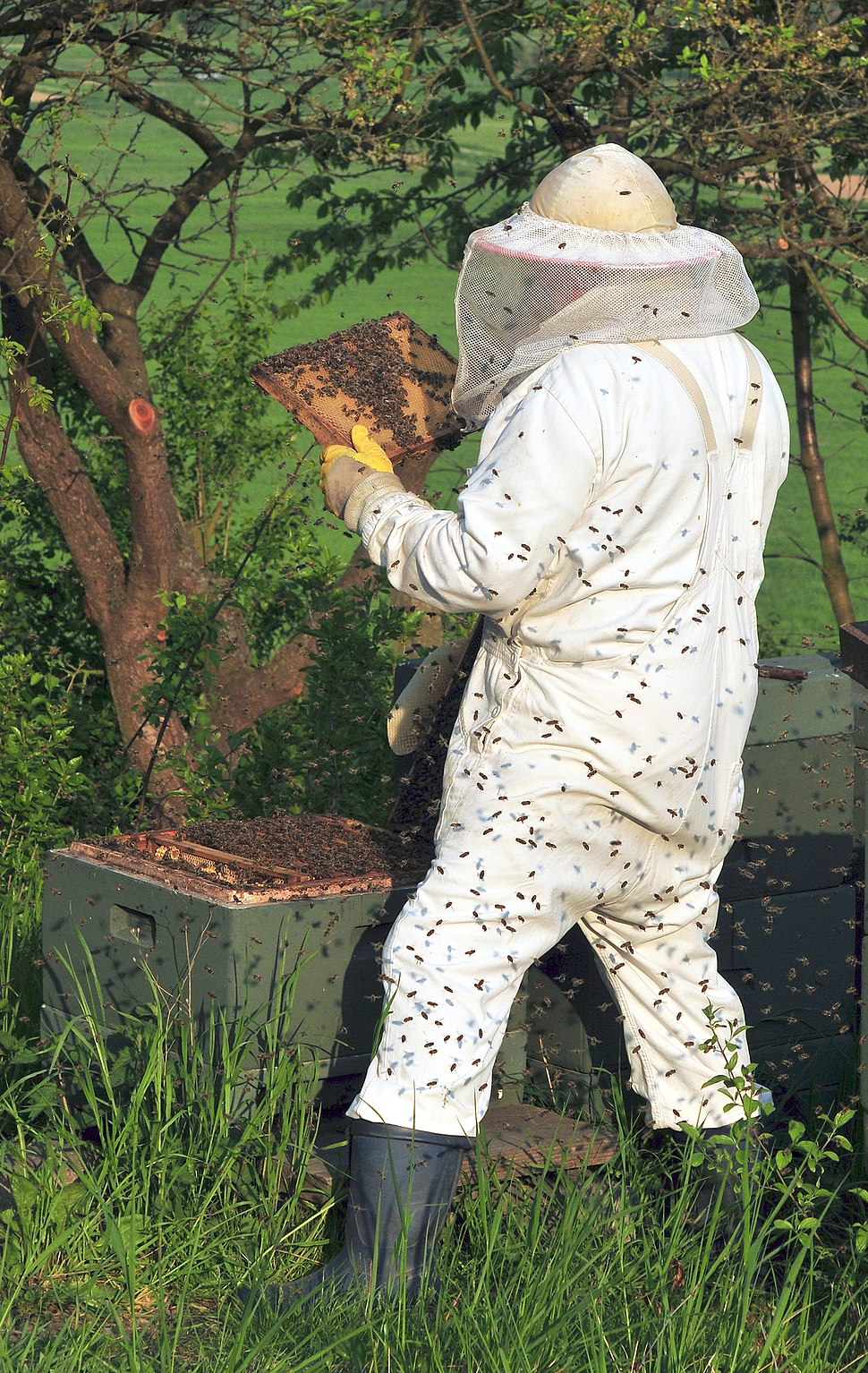 Beekeeper keeping bees