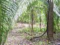 Belize jungle Laslovarga001.JPG