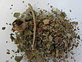Belladonae folium1.JPG