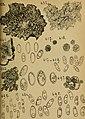 Bericht des Naturwissenschaftlichen Vereins für Schwaben und Neuburg (a.V.) in Augsburg (1906) (20177848388).jpg