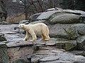 Berlin Zoo (6264114373).jpg