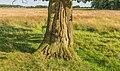Beschadigde bast van een Eik (Quercus). Locatie, natuurgebied Delleboersterheide – Catspoele 01.jpg