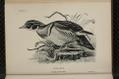 Birdcraft-0050.png