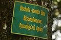 Bischofia javanica Kolli hills JEG3181.jpg