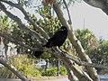 Blackbird - panoramio (1).jpg