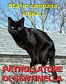Blackcat-Lilith-on-patrol-ITA.jpg