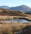 Blind Tarn above Eskdale - geograph.org.uk - 667117.jpg
