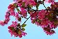 Blossoms (180878155).jpeg