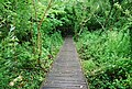 Boardwalk, Slapton Ley - geograph.org.uk - 824282.jpg