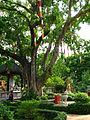 Bodhi Tree Giac Lam.jpg