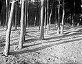 Bos bij Laren, Bestanddeelnr 252-0878.jpg