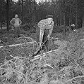 Bosbewerking, arbeiders, bomen, gereedschappen, Bestanddeelnr 251-9123.jpg