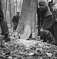 Bosbewerking, arbeiders, bomen, omvallen, Bestanddeelnr 251-7131.jpg