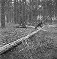 Bosbewerking, arbeiders, boomstammen, gereedschappen, Bestanddeelnr 251-7780.jpg