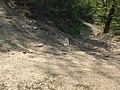 Bosco presso il borro di Lavello - panoramio.jpg