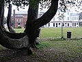 Boscombe, Shelley House and distinctive tree - geograph.org.uk - 999865.jpg