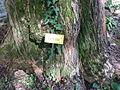 BotanicGardensPisa (79).JPG