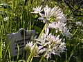 Botanical garden Krakow (2006-05-13) 05.jpg