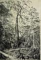 Botanische Jahrbücher für Systematik, Pflanzengeschichte und Pflanzengeographie (1907) (20394448562).jpg