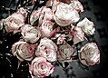 Bouquet of Roses (3701147946).jpg