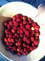 Bowl of Strawberry Tree berries.jpg