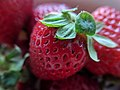Bowl of strawberries macro.jpg