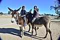 Boys on donkeys, Andriesvale, Kalahari, Northern Cape, South Africa (20545213071).jpg