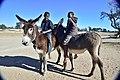 Boys on donkeys, Andriesvale, Kalahari, Northern Cape, South Africa (20545213071).jpg