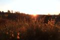 BrachterWald bei Sonnenaufgang06.png