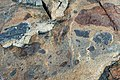 Breccia (Shatter Zone, Late Devonian; Sand Beach, Mt. Desert Island, Maine, USA) 15.jpg