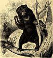 Brehms Tierleben - allgemeine Kunde des Tierreichs - mit 1800 Abbildungen im Text, 9 Karten und 180 Tafeln in Farbendruck und Holzschnitt (1890) (20414485445).jpg