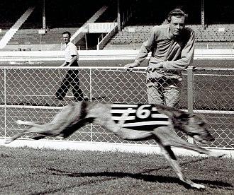 1960 English Greyhound Derby - Clonalvy Romance in 1959