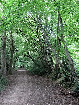 Bridleway to Ditchling Common - geograph.org.uk - 1446376