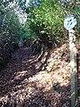 Bridleway to Ridden Corner - geograph.org.uk - 303087.jpg