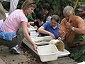 Bringing aquatic macroinvertebrates (5333414826).jpg
