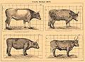 Brockhaus and Efron Encyclopedic Dictionary b51 028-0.jpg