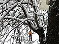 Bucuresti, Romania. Zi de iarna autentica in Bucuresti. 6.02.2020.jpg
