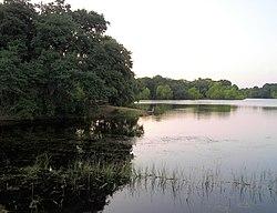 Buescher state park 2007.jpg