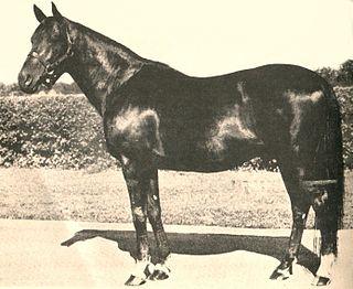 Bull Lea American-bred Thoroughbred racehorse