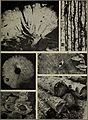 Bulletins on forest pathology - from Bulletin U.S.D.A., Washington, D.C., 1913-1925 (1913) (20317406680).jpg