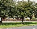 Bungalows on Longmoor Road - geograph.org.uk - 923151.jpg