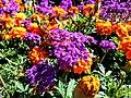 Butchart Gardens - Victoria, British Columbia, Canada (29325639401).jpg
