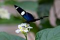 Butterfly at Chester Zoo 14.jpg