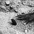 COLLECTIE TROPENMUSEUM Een scheermes en een koppen zetter gebruikt bij een aderlating TMnr 20010386.jpg