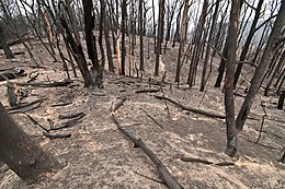 CSIRO ScienceImage 10345 The Kinglake National Park after the Black Saturday bushfires.jpg