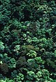 CSIRO ScienceImage 1595 Rainforest Canopy.jpg