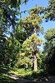 Jardin des plantes de caen wikip dia - Le jardin des plantes caen ...