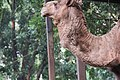 Camel in the cage 4.jpg
