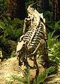 Camptosaurus at the CMNH.jpg
